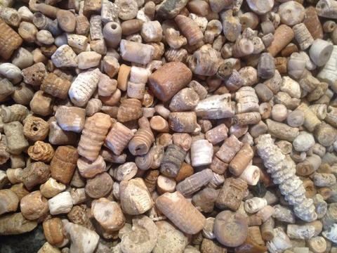 12 Collectible Rocks and Fossils of the Great Lakes | Great Lakes Locals