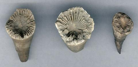 12 Collectible Rocks and Fossils of the Great Lakes | Great